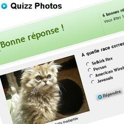 quizz photos races chien chat rongeur wamiz