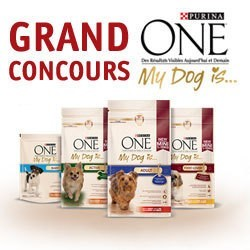Concours purina ONE my dog is ?