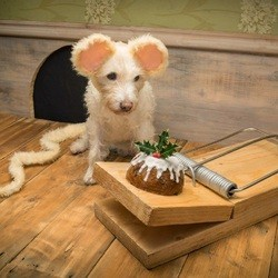 chien carte de voeux