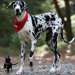 record du monde chien