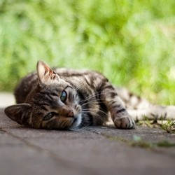recueillir chat abandonné adopter chat errant