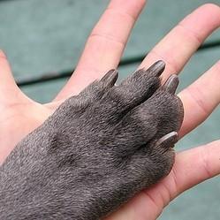 rééduquer chien