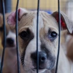 protection des animaux avocat pour animaux