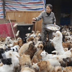 refuge chiens errants chine