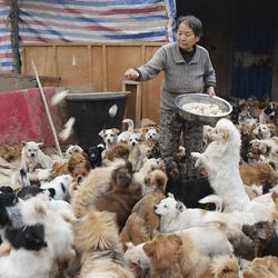 refuge chiens errants chine