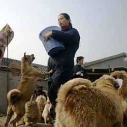 refuge pour animaux chine