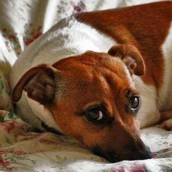 chien refuge