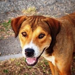 refuge spa chien euthanasie