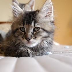 un hôtel propose de passer la nuit avec un chaton