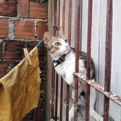 chat perdu retrouver son chat