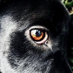 reussir photo chien chat oeil rouge