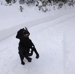 chien mange neige