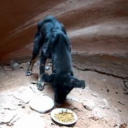 sauvetage chien jeté dans un canyon