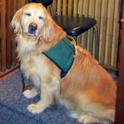 chien d'assistance d'accompagnement