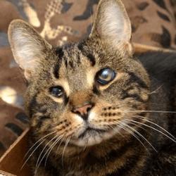 Rufus le chat aveugle