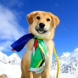 Rupee, le premier chien à avoir escaladé l'Everest
