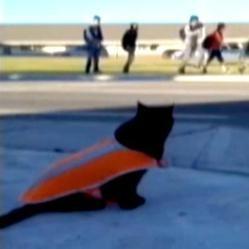 un chat noir surveille les élèves d'une école pendant qu'ils traversent