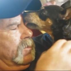 une chienne déctecte le cancer de son maître