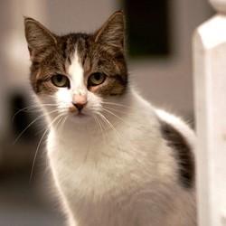 sauvetage chats association saint denis