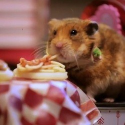 hamsters diner saint valentin