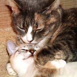 chats qui se calinent