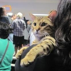 salon du chat concours beauté chat