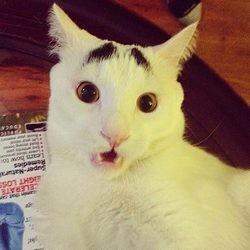 sam chat star du web sourcils