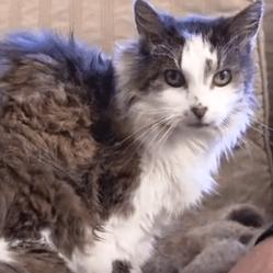 sarah chat le plus vieux du monde