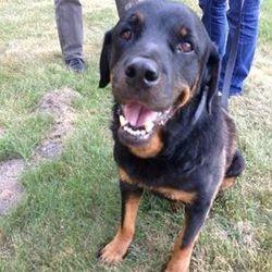 elle retrouve son chien 5 ans après sa disparition