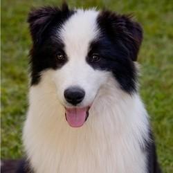 un chien sauvé par les gendarmes dans les vosges