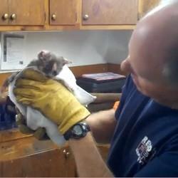 sauvetage chat pompier tuyau video