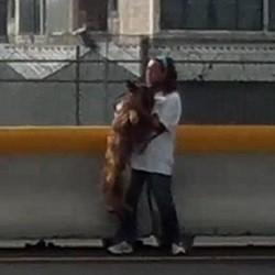sauvetage chien sur l'autoroute