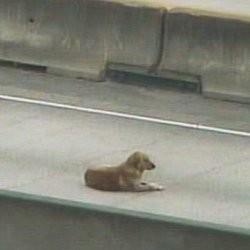 sauvetage chien autoroute