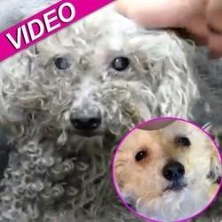 sauvetage chien aveugle video