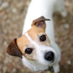 le sauvetage d'un chien coincé dans une galerie
