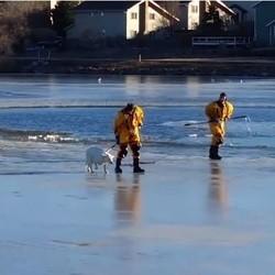 sauvetage chien lac gelé