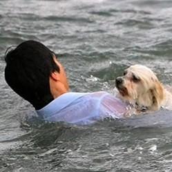 sauvetage chien mer video