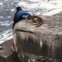 sauvetage chien