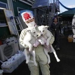 chiens chats sauvetage fukushima
