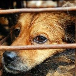 sauvetage chiens chine
