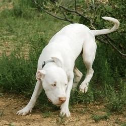 sauvetage chien dogue argentin eau glacee photos