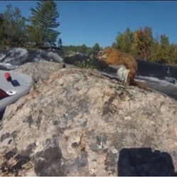 un homme sauve un écureuil noyé