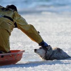 sauvetage husky