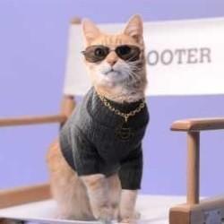 Scooter chat stérilisé
