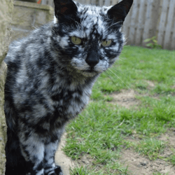 chat vitiligo