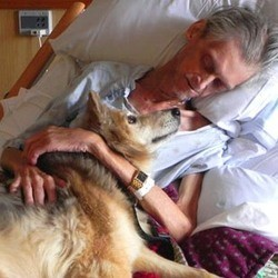 sdf chien hopital amour