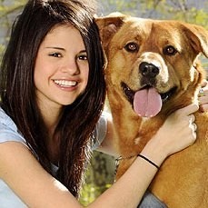 justin bieber selena gomez adoption chien disney