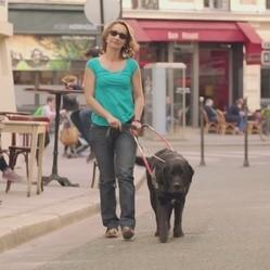 Les écoles de chiens guides d'aveugle vous ouvrent leurs