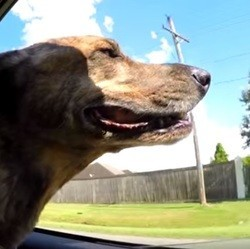 Vidéos de Sheridan