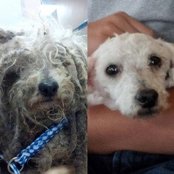 sauvetage chien abandonné